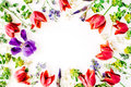 Floral frame with red tulips, yellow flowers, purple iris, branches, leaves and petals isolated on white background Royalty Free Stock Photo