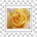 Floral frame retro lovely rose in decorative frame vintage style