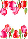 Floral frame of a tulip flowers.