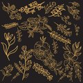 Floral Gold Vector Design