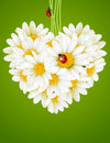Floral love card (camomile heart) Stock Photos