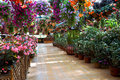 Floral park store countless flowers colorful flowers attract many tourists Stock Photo
