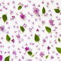 Floral pattern of fresh lilac flowers and leaves on white. Royalty Free Stock Photo
