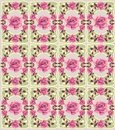 Floral retro seamless pattern roses ornamental summer Royalty Free Stock Image