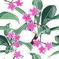 Floral seamless exotic pattern. Tropical pink plumeria branch with leaves on white background.