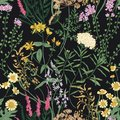 Floral seamless pattern with beautiful wild blooming flowers on black background. Backdrop with meadow flowering