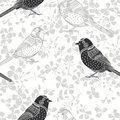 Floral seamless pattern with birds. Monochrome  background Royalty Free Stock Photo