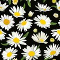 Floral Seamless Pattern with Chamomile Flowers. Natural Background with Daisy Flowers for Spring Summer Design Royalty Free Stock Photo
