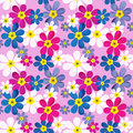 Floral seamless pattern with colorful flowers texture background Royalty Free Stock Image