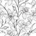 Floral seamless pattern. Flower black and white background. Flor Royalty Free Stock Photo