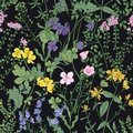 Floral seamless pattern with romantic blossoming wild flowers and meadow flowering herbaceous plants on black background Royalty Free Stock Photo