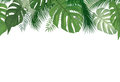 Floral seamless pattern. Tropical leaves background. Palm tree l Royalty Free Stock Photo