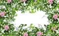 Floral spring decoration frame with pink roses, green leaves and wild herbs on white background