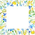 Floral square frame of a wild flowers and herbs on a white background. Royalty Free Stock Photo