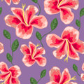 Floral texture with stylish seamless hibiscus pattern Royalty Free Stock Photo