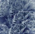 Floral vintage blue beautiful background. Flower composition. Bouquet of flowers from dark blue roses. Close-up.