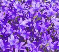 Floral vivid background Royalty Free Stock Photo