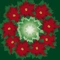Floral wreath of poinsettia Royalty Free Stock Photos