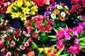 Flores brillantes con color hermoso en un mercado Imagenes de archivo