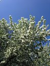 Florescence of flowers amazing in spring against blue sky Stock Photos