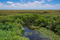 Florida everglades landscape view of the at shark valley showing wetlands and sawgrass prairie Royalty Free Stock Photography