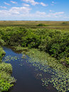 Florida everglades view at shark valley showing wetlands and sawgrass prairie Royalty Free Stock Photos