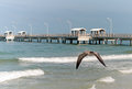 Florida Gull in flight Royalty Free Stock Photo