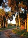 Florida gulf coast sunset fishing marsh wildlife preserve Royalty Free Stock Photo