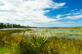 Florida nature preserve beautiful in port saint lucie Royalty Free Stock Image