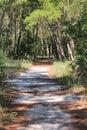 Florida natury ślad Zdjęcie Royalty Free