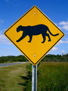 Florida Panther Crossing Royalty Free Stock Photos