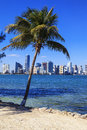 Florida style miami viedw of skyline and palm tree Royalty Free Stock Images
