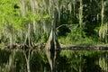 Florida Swamp Landscape With C...