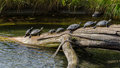 Florida turtles in the tête d or park lyon france Stock Photos