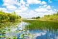 Florida Wetland, Airboat Ride ...