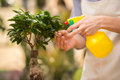 Florist close up young handsome male spraying flower in shop Royalty Free Stock Photography
