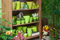 In the florist shop green flower pots Stock Image