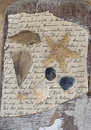 Flotsam on old letter Royalty Free Stock Photo
