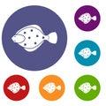 Flounder fish icons set