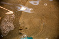 Flounder merged with sand in the fish market is completely the the art of mimicry Stock Images