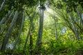 The flourish bamboo forest, Adgara, Georgia