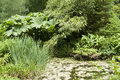Flourish vegetation seen in huelgoat brittany france Royalty Free Stock Photography