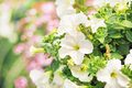Flourish White Flowers In The ...