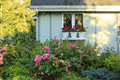 Flourishing farm backyard with decorated window house exterior rustic flower pots and beautiful flowerbed Royalty Free Stock Photography