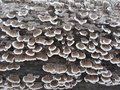 Flourishing fungus Royalty Free Stock Photo