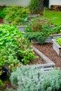 Flourishing Neighbourhood Community Garden. Royalty Free Stock Photo