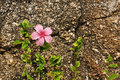 Flower against coarse rock background Stock Image