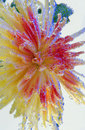 Flower in the air bubbles Stock Photos