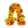 A flower alphabet hot tone isolated on white background. Royalty Free Stock Photo
