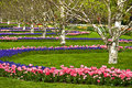 Flower arrangement park in spring Stock Photo
